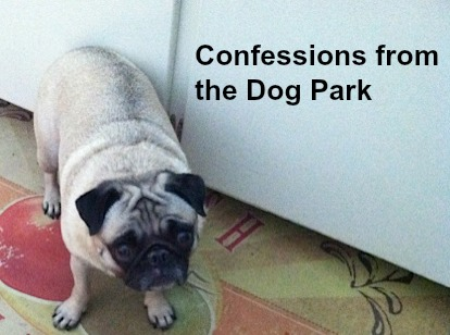 Life Lessons Learned at the Dog Park